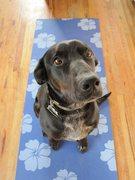 Bosco ready to do some doga
