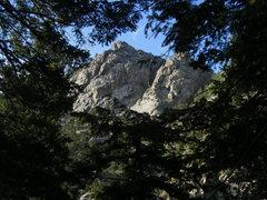 Rock Climbing Photo: Blob Rock through the trees.
