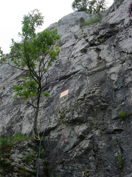 Zsuzsa at Bajót.  Route follows the rope, except this is with an extended finish on the route called Sensor.  The actual line simply ends with the scramble slightly to the right.