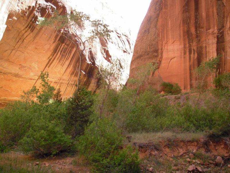 Riparian canyon stretch