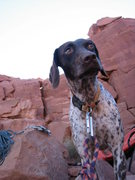 Rock Climbing Photo: Daisy at the base of the Priest Castle Valley, UT.