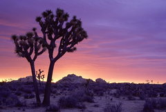Rock Climbing Photo: Joshua Tree Sunrise - California