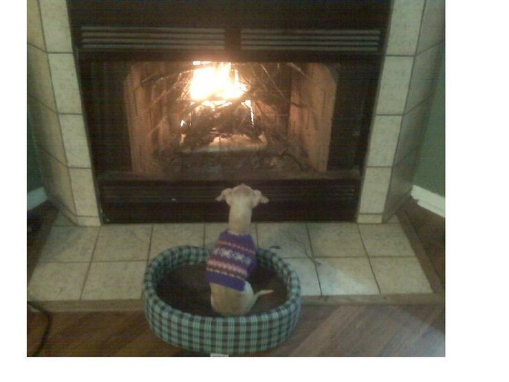 Here's Cookie last winter wishing she was sitting by the camp fire as opposed to the fireplace.  Yes, I have a dog that wears a sweater.  :-)