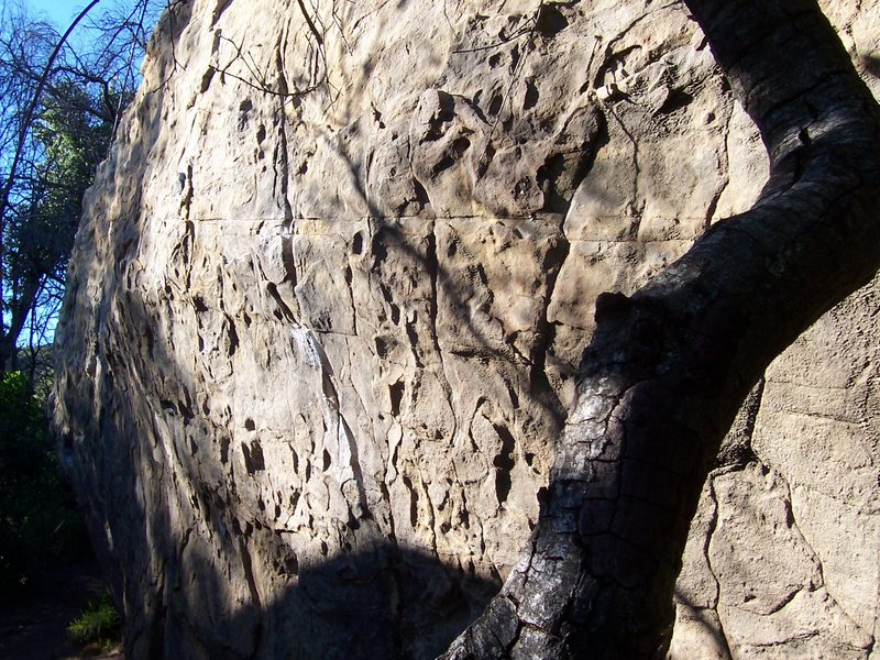 The Ant Traverse, V4-5. Back side of Ant Boulder...Jason's Favorite is the chalked crack splitting the center of the boulder. Traverse starts at the base of the crack and moves left along good positive edges with cruxy feet.