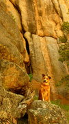 Rock Climbing Photo: Phoenix eagerly awaiting the FA of Constant Garden...