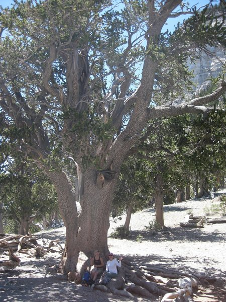 &quot;The Rain Tree&quot;, a 3,000 year old Bristlecone at Mt. Charleston, Nevada. Holly, and Karen put there for scale. : ).<br> <br> Taken on Independence Day 2010.