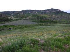 Rock Climbing Photo: Beautiful wild flowers near the Wild Iris...yes, t...
