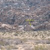 The Iceberg Boulder from the road, Joshua Tree NP