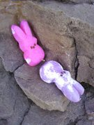 Rock Climbing Photo: Peeps doing what rabbits do so well