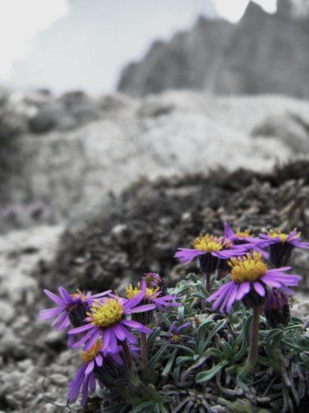 Rock Climbing Photo: Temple Flowers