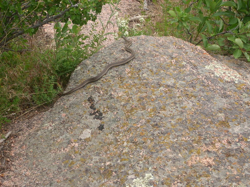 Rock Climbing Photo: We encountered two of these as we were fleeing the...