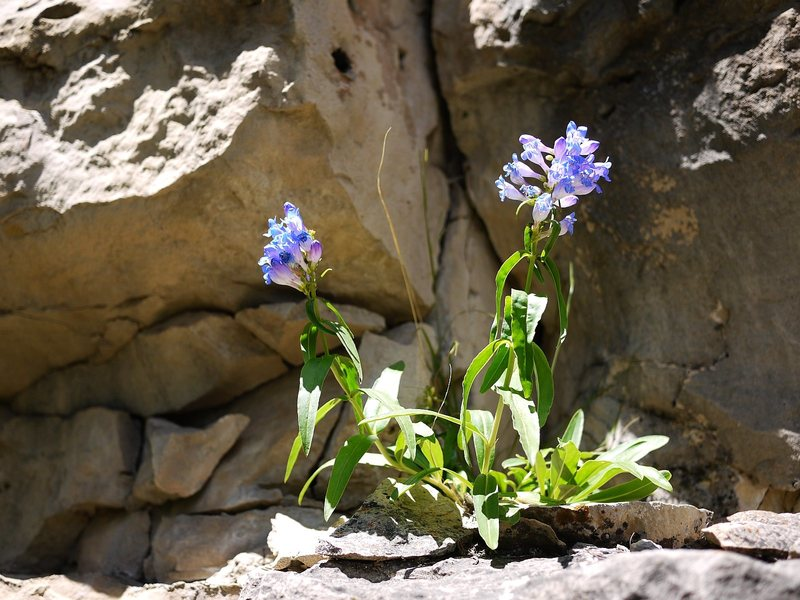 Rock Climbing Photo: Flowers at the AMC wall.
