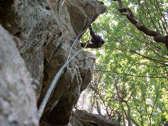 "Rock Climbing Photo: ashley holmes ""out on a limb"""