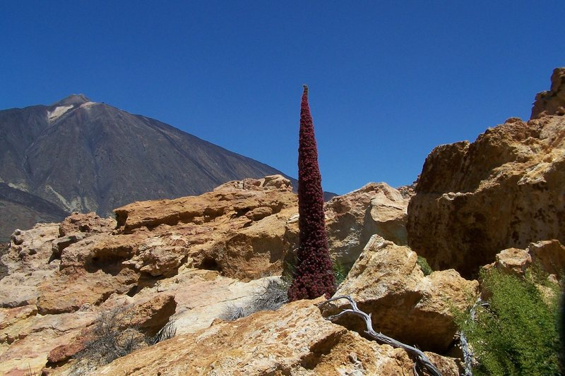 Rock Climbing Photo: Mount Teide National Park.
