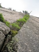 Rock Climbing Photo: Technical Vegetation.