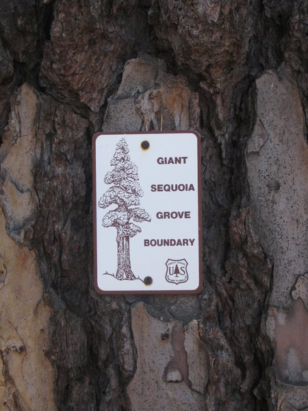 Hermit Spire is within the Giant Sequoia Grove.