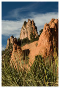 Rock Climbing Photo: Yucca in the Garden of the Gods.
