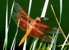 Rock Climbing Photo: Dragonfly. Photo by Blitzo.
