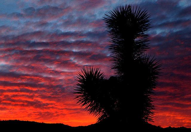 Rock Climbing Photo: Yucca Sunset. Photo by Blitzo.