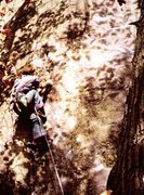 Rock Climbing Photo: Classic photo of Tommy on first lead of All the Wa...