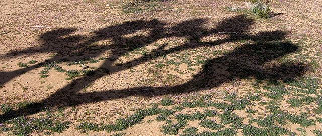 Rock Climbing Photo: Joshua tree shadow. Photo by Blitzo.