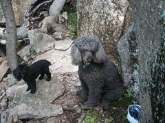 Rock Climbing Photo: Black bear and cub seen at Owl's. Note the helmet ...