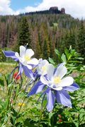 Rock Climbing Photo: Rabbit Ears Meadows of Flowers, Steamboat Springs,...
