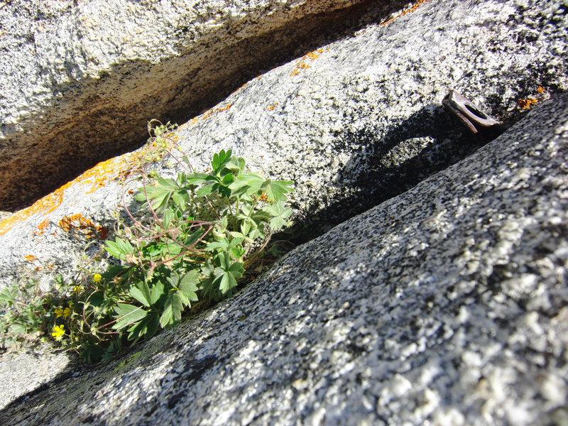Rock Climbing Photo: Fixed pin on P4 of El Whampo