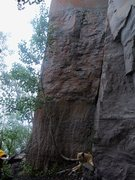 Rock Climbing Photo: One of the better routes in the Jungle(s).