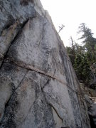 Rock Climbing Photo: The tree growing out of the face of Arctic Temple ...