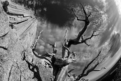 Rock Climbing Photo: West Face of Devils Tower through the fisheye lens...