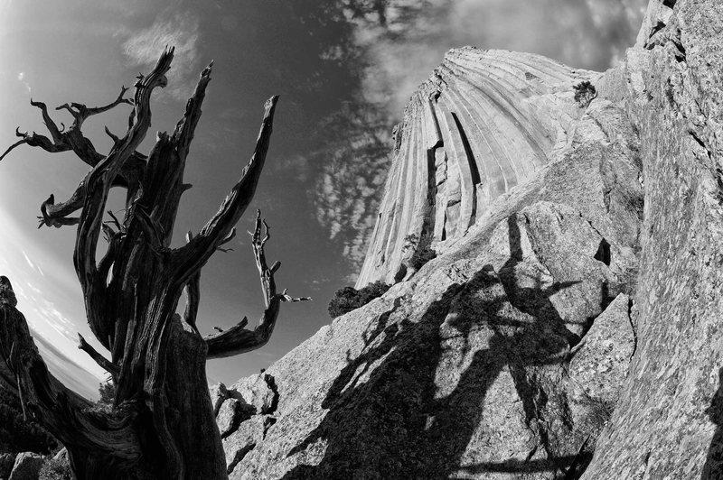 Devils Tower, dead tree, fisheye lens.