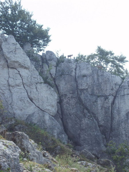 """Rock Climbing Photo: """"local"""" above the easy routes..."""