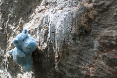 Rock Climbing Photo: Eyeing the next hold on good earth