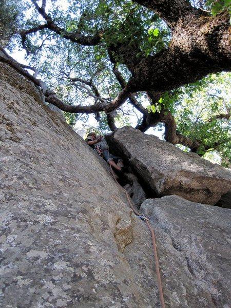 Rock Climbing Photo: Tradicals