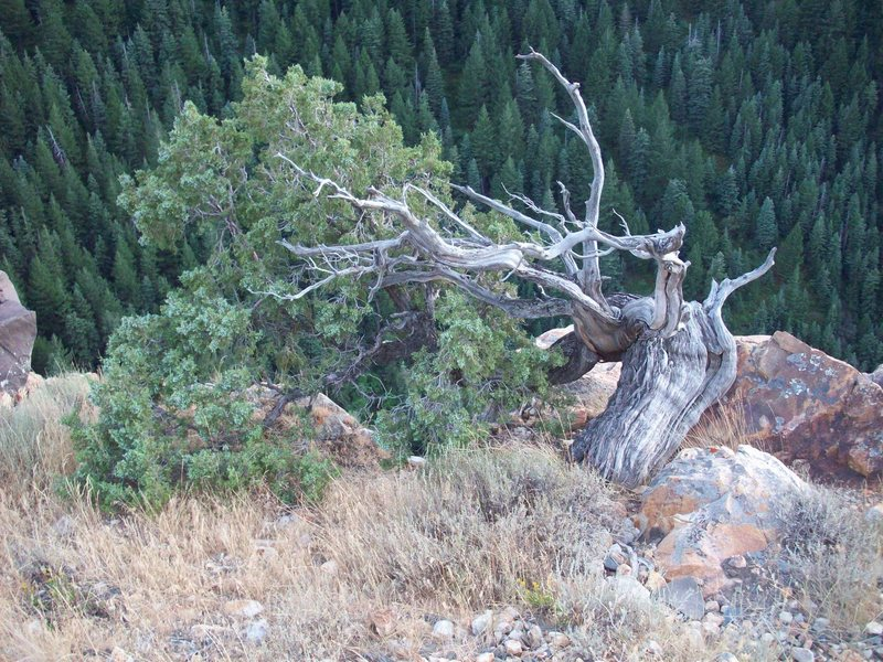 Rock Climbing Photo: Tree at the top to anchor to.  There are also a se...