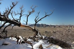 Rock Climbing Photo: Just after a winter storm, Joshua Tree NP