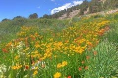 Rock Climbing Photo: Wildflowers in abundance along the Glacier Canyon ...