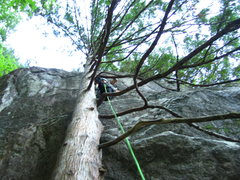 Rock Climbing Photo: the tree start is a must do!
