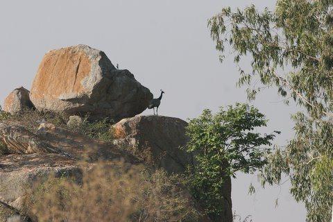 Rock Climbing Photo: Turahali