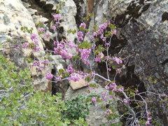 Rock Climbing Photo: start of Emerald Cushion (5.7?)
