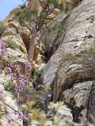 Rock Climbing Photo: Start of Emerald Cushion