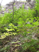 Rock Climbing Photo: The climb is above this vegetated and tree covered...