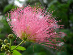 Rock Climbing Photo: Mimosa. Photo by Blitzo.