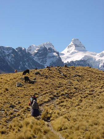 alpine pasture below Condoriri (Bolivia)