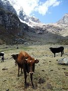Rock Climbing Photo: Cordillera Huayhuash (Peru): if only all pastures ...