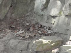 Rock Climbing Photo: Do you see the copperhead snake? Watch out when yo...