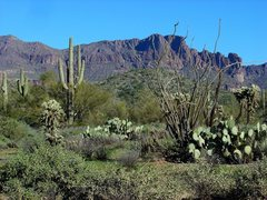 Rock Climbing Photo: Somewhere near Phoenix, not sure where this was, 2...