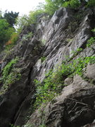 Rock Climbing Photo: Sadly, badly overgrown but ascends the terrain in ...