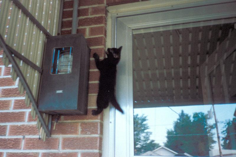 Kittie climber
